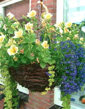 Цветущий сад садовые цветы и растения